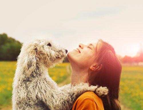 2021 Top Ten Count-down to Pet Health