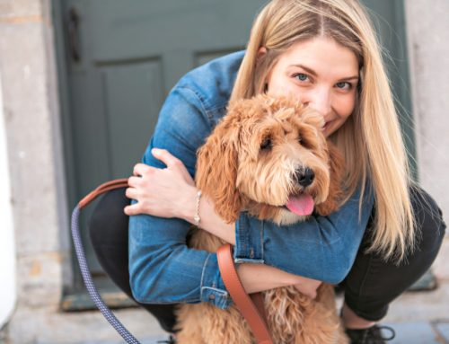 Microchips Make for Happy Reunions