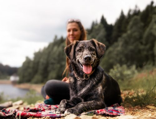 Into the Woods: 7 Steps to Safe Camping and Hiking With Dogs