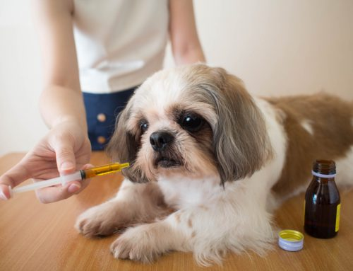 How to Successfully Give Your Pet Oral Medication