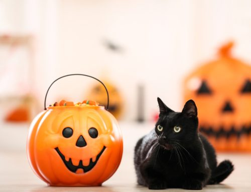FAQ's About Pet-Safe Treats